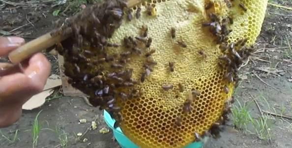tips usaha ternak lebah madu