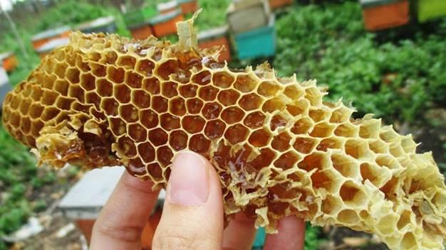 cara ternak lebah madu Star Farm